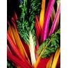 Acelgas Multicolor 15 Semillas