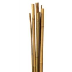 Pack10 Tutor de Bambú para sujetar Plantas 6/8mm (60cm)