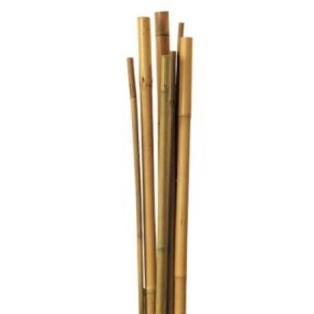 Pack25 Tutor de Bambú para sujetar Plantas 6/8mm (60cm)