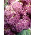 Coliflor Violeta de Sicilia