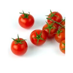 Tomate Cherry Lilliput Rojo