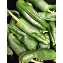 Pimiento Verde de Gernika