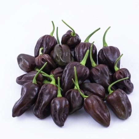Chile Habanero Chocolate